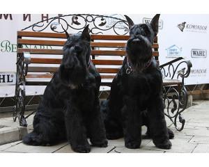 Стрижка собак крупных пород