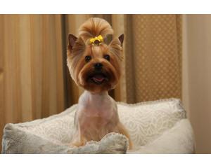Стрижка собак мелких пород