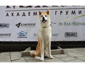 СПА для собак