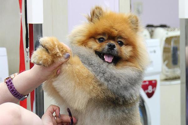 Груминг для собак самара