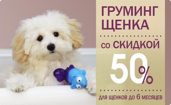 Грумминг щенка со СКИДКОЙ 50%!