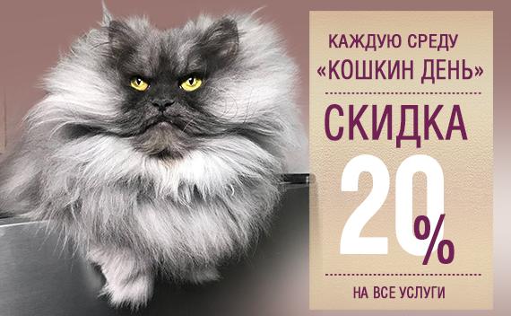 Кошкин день