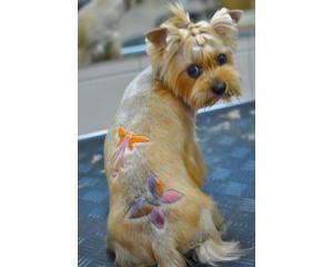 Креативные (необычные) стрижки собак