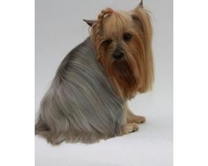 Гигиеническая стрижка собак