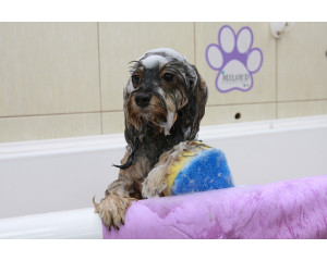 Мытье и сушка собак